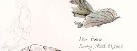 Akins Prairie - Sketches